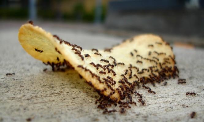 Image result for μυρμήγκια