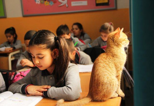 γάτα_σχολείο
