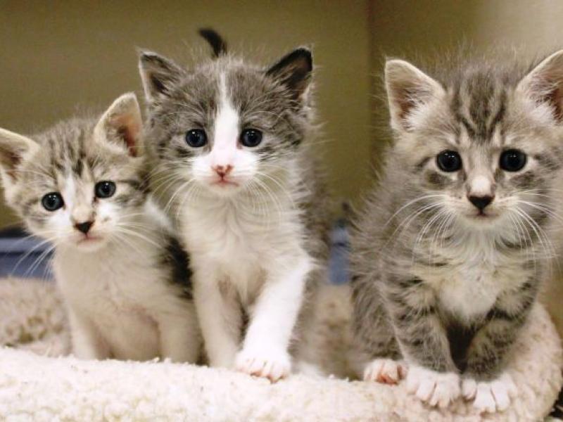 bae9f3a8b441 Ρωσία  Σχεδιάζεται εμβόλιο για την αλλεργία στις γάτες