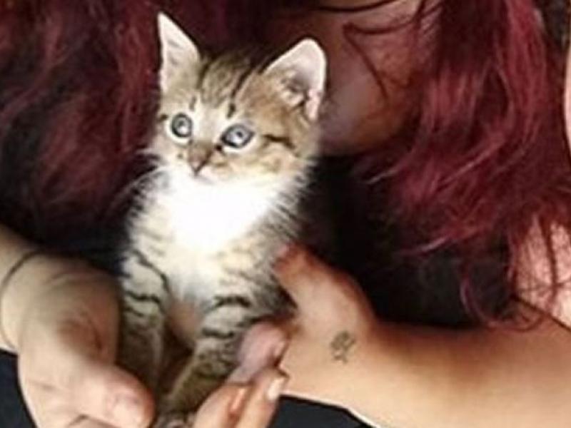 12c602633169 Απίστευτη αγριότητα στην Κρήτη - Σούβλισαν με ξύλο νεογέννητο γατάκι ...