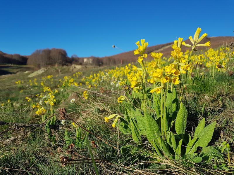 Το «Λουλούδι του Δαρβίνου» καλλιεργείται για πρώτη φορά στην Ελλάδα