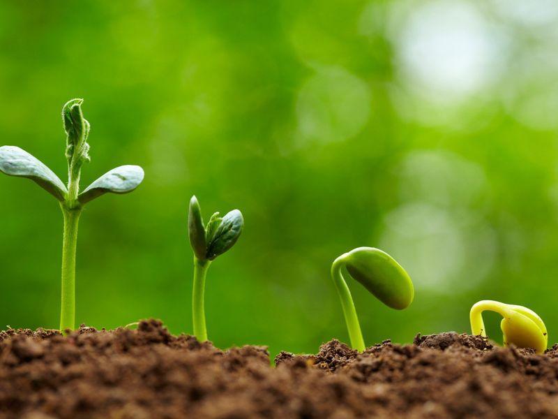 Counter Agriculture: Φοιτητής έφτιαξε την πρώτη εφαρμογή φυτοπροστασίας